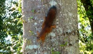 Les écureuils jouent au camping dordogne sarlat 3 étoiles la Butte dasn le périgord en bord de rivière